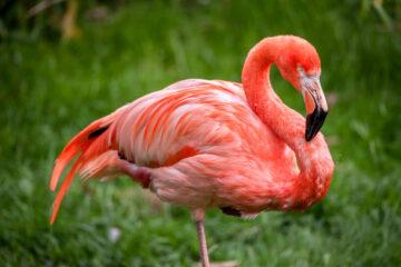 Dit mag je niet missen in Zoo Antwerpen