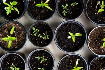 Breng je tuin in topconditie, ook bij droog weer